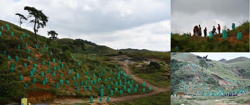 INTENSIVE AFFORESTATION UNDER JSA, WEILOI VEC, MAWSYNRAM C&RD, EAST KHASI HILLS DISTRICT